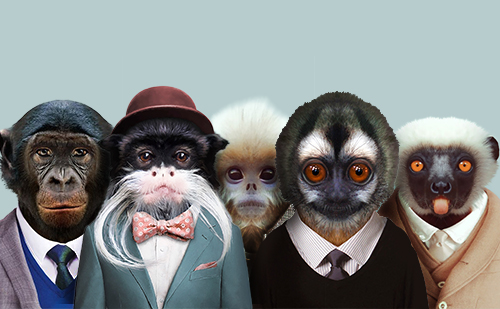 les-singes-partenaires-monkeymedias