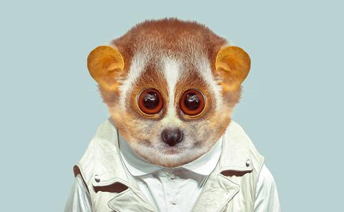 Singe-Geoffrey-Leroy-Monkey-Medias