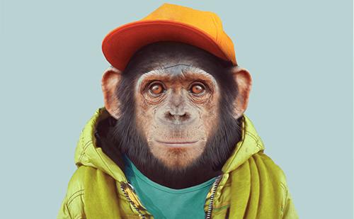 Singe-Sandro-DiGiovanni-Monkey-Medias