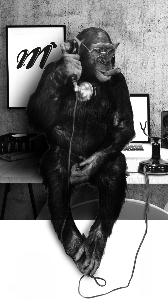 singe-telephone-monkey-medias-communication